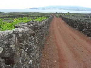 Looking out towards Faial.