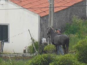 A farmer tending to his horse.