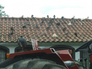 Tractors and pigeons