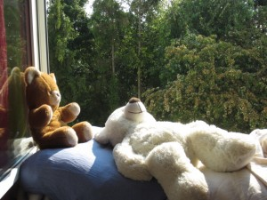 bears in the sun
