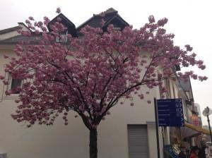 Springtime in Oberursel