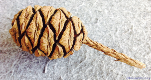 Sequoia cone and seeds