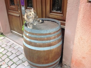 cat on keg