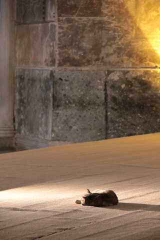Hagia Sophia cat #2