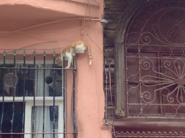 cat stuck on window gate