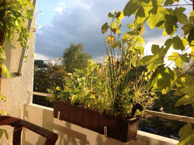 Balcony August 2016